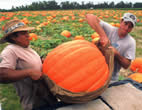 Largest Pumpkin Winner